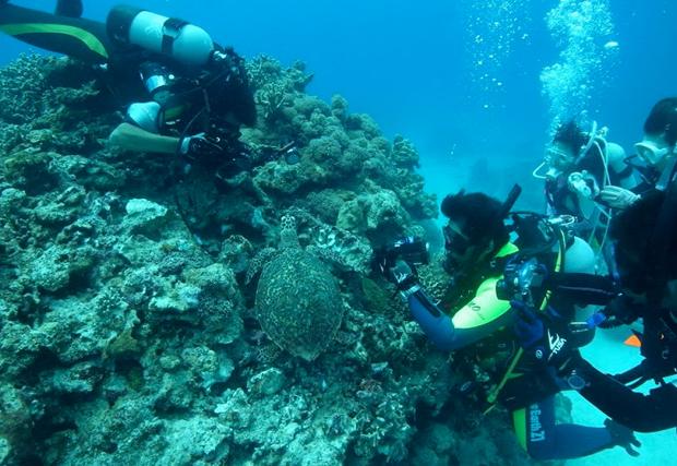 diving-term