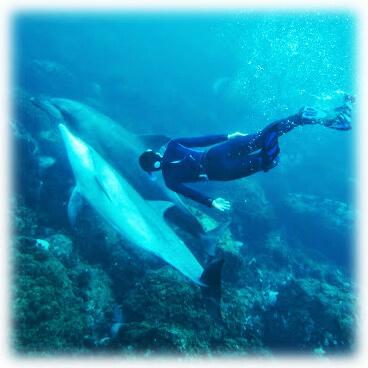 イルカさん1