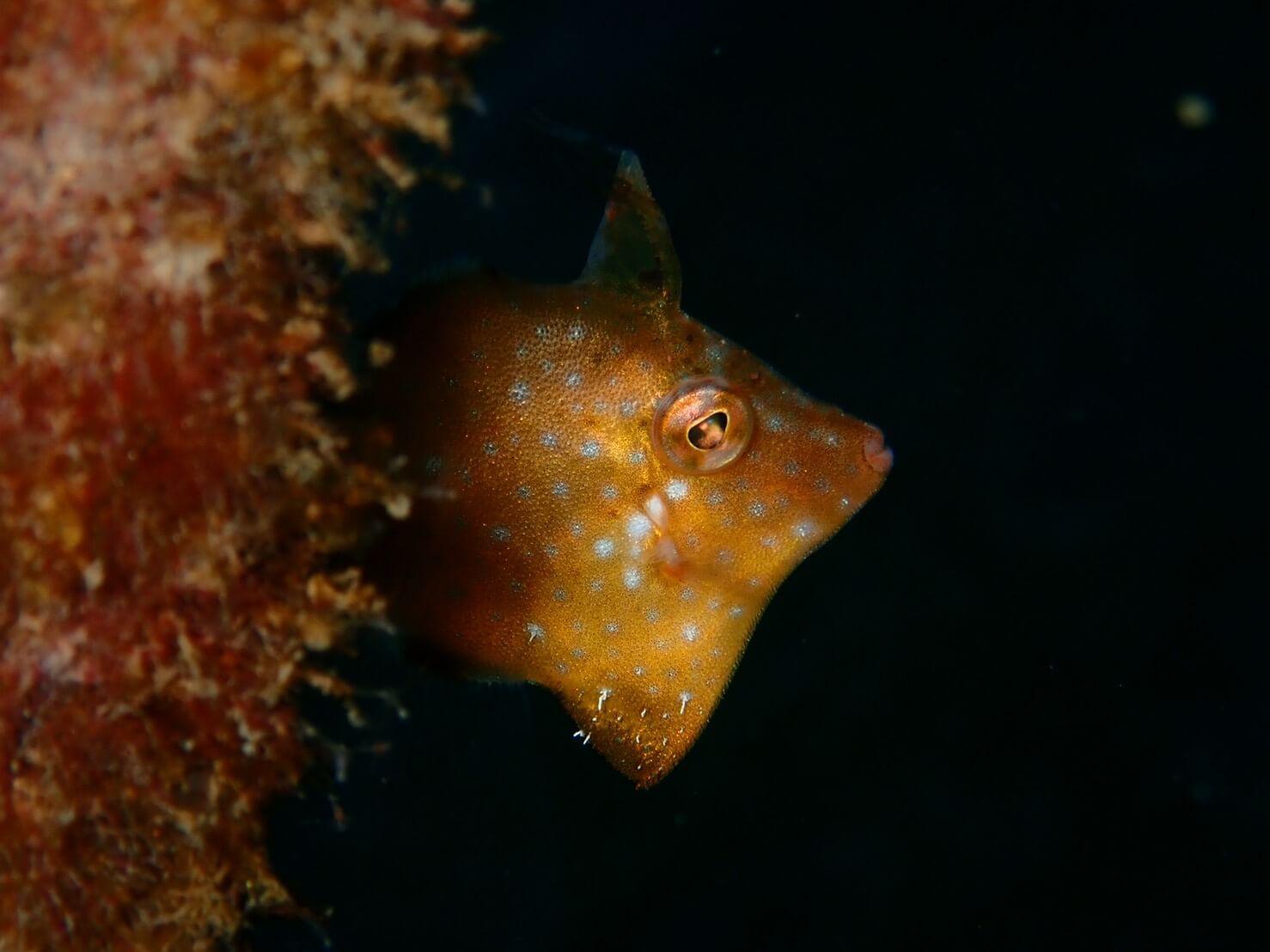 スキューバダイビングで会える生物の写真